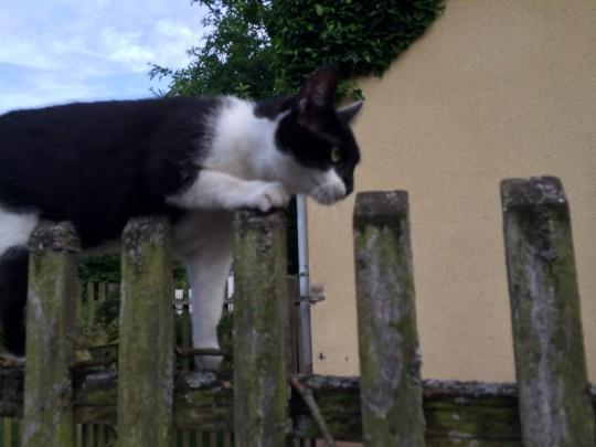 Katze Pauli, unermüdlich auf Abenteuersuche